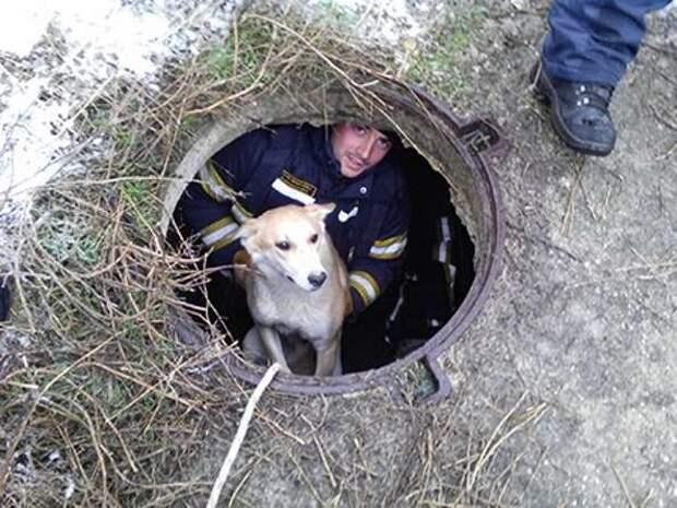 Спасатели вытащили застрявшего в теплотрассе мужчину и достали из колодца собаку