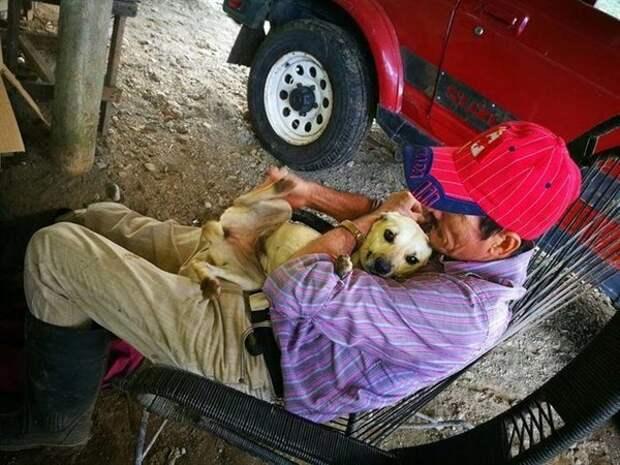 Все проходили мимо лежащего на земле старика. И только пес старался спасти хозяина