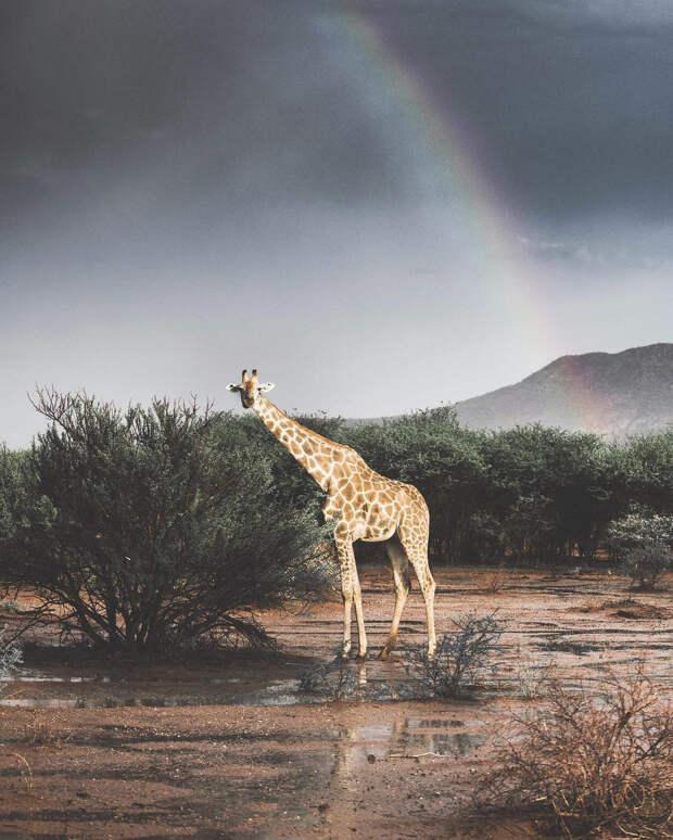 Когда дикая природа вызывает восторг. Фотограф Донал Бойд 29