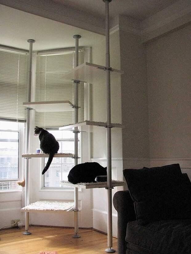 cathouse24 Дизайн для котов