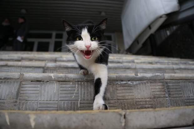 Председатель Совета депутатов Марьиной Рощи направила обращение в Мосгордуму по вопросу отлова животных. Фото: Артур Новосильцев