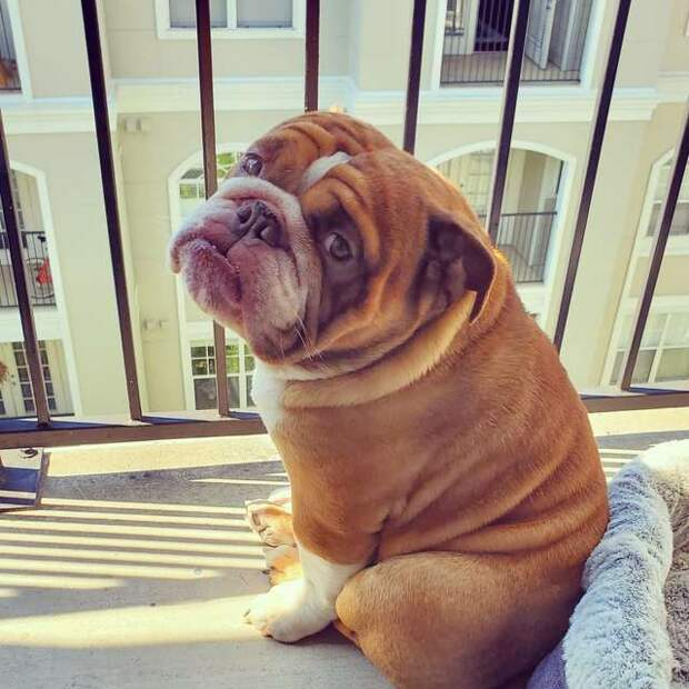 собака на балконе