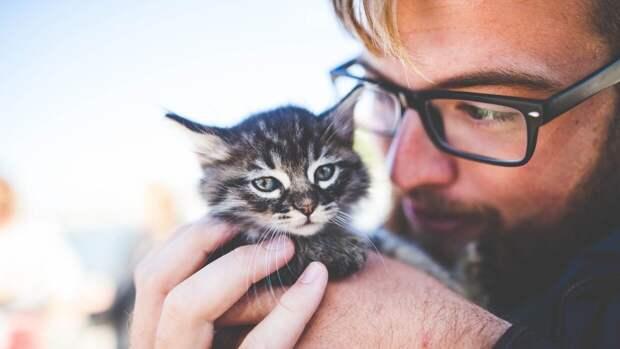 Ученые объяснили, как кошки понимают своих хозяев
