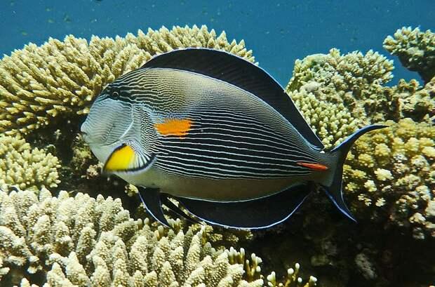 Туристам в Египте запретят кормить местных рыб