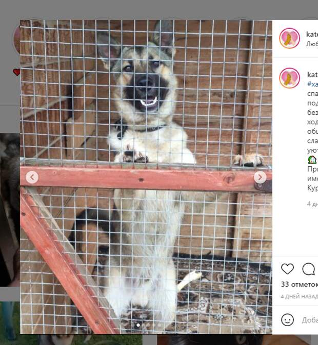 Собаку в депрессии с проспекта Защитников Москвы забрали волонтеры