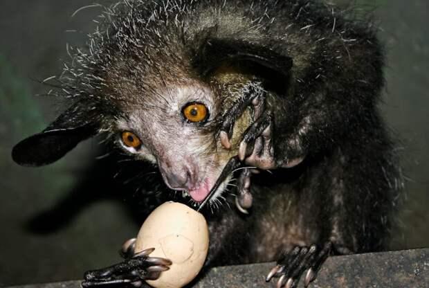 ТЕРЕМОК. Необычные животные