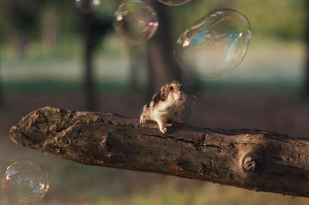 cute-hamsters-7__880