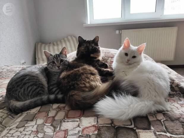 Клип на стихи ижевского поэта на тему интернет-мема «Наташа и коты» сняли в Перми