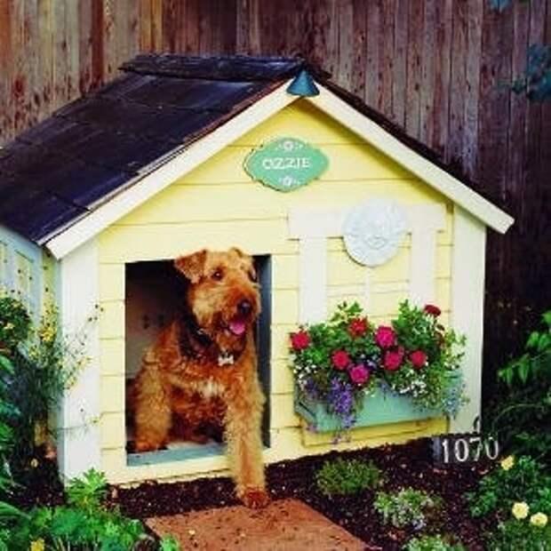 Собачья жизнь. Креативные будки для собак