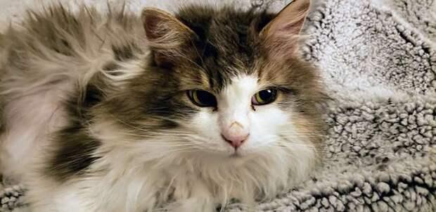 Котика, который едва не замерз в снегу, чудом удалось спасти