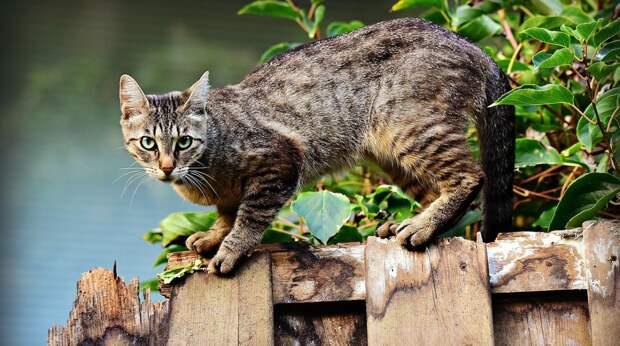 Почему кошка катается на спине и ещё 2 кошачьих поступка, которых не понимают хозяева