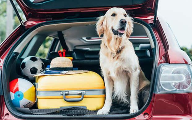 Рейтинг «За рулем»: лидеры В-класса по объему багажника (реальные замеры)