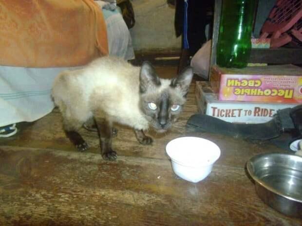 В спутанной шерсти кошки торчали стекло и куски мусора, она даже не могла открыть глаза