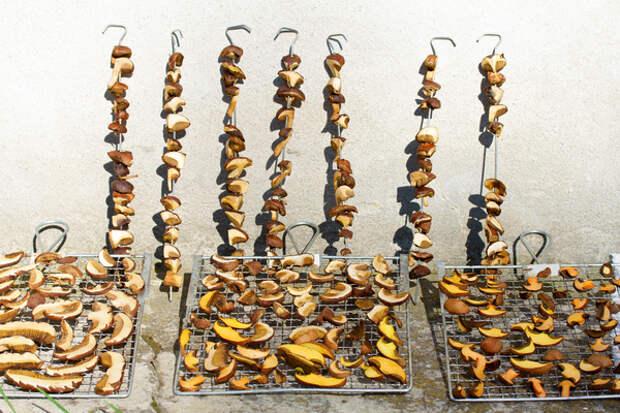 грибы, разложенные для сушки на решетки и нанизанные на шампура