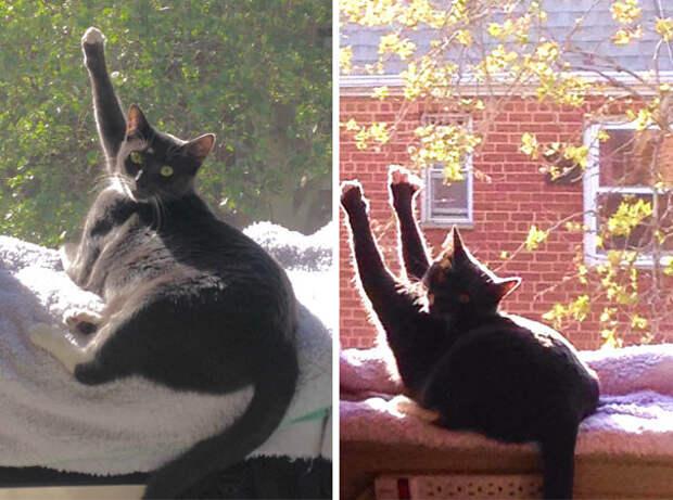 Так кошка моего бойфренда приветствует солнце одной или обеими лапами животные, котики, лучи, погреться, солнечные ванны, солнце, температура, тепло