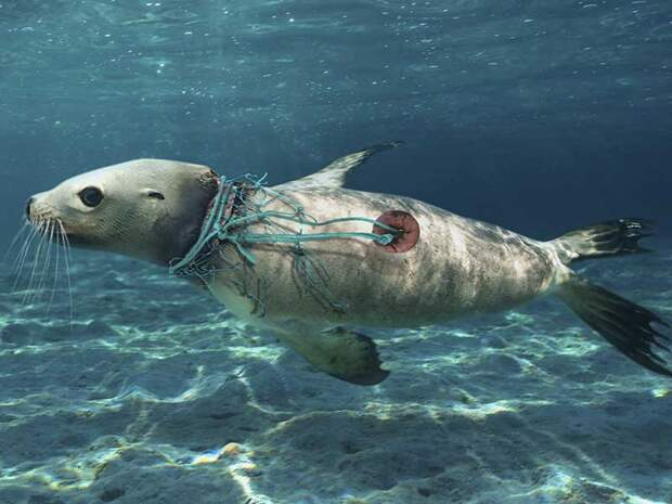 Лучшие фото обитателей океана (красота подводного мира)