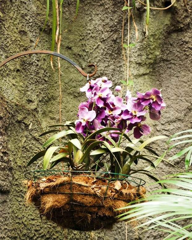 Пересадите орхидею в корзинку - пышное цветение гарантировано!