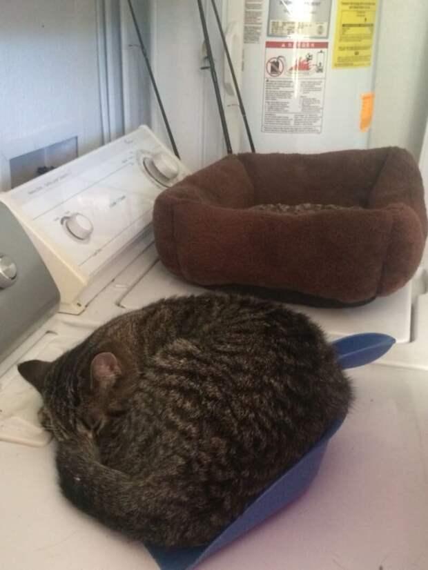 1. Во-первых, надо себе сразу уяснить: они будут спать где угодно, но только не там, где вы приготовили им место Кошка в доме, домашние животные, забавные фото с котами., кошка, кошки, фото кошек, хозяева животные, юмор