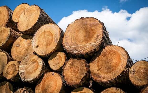 На Кубани таможенники пресекли контрабандный вывоз древесины в Таджикистан