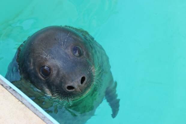 Таяние арктического льда привело к уничтожению тюленей
