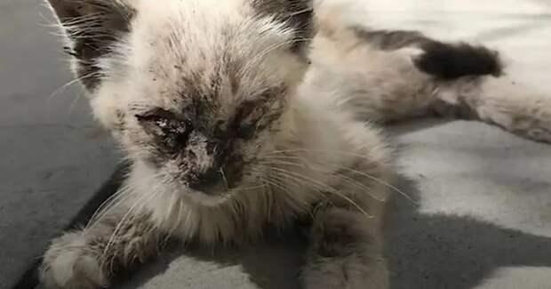На брошенную кошку было больно смотреть