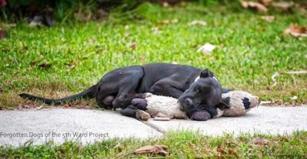 Она увидела бездомного пса, обнимающего старую игрушку. Этот снимок разлетелся по Интернету