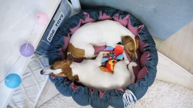 Лежанка-трансформер для собак своими руками