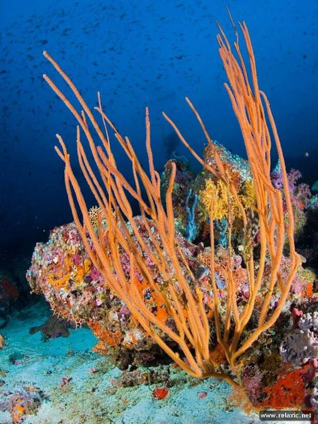 underwater_013