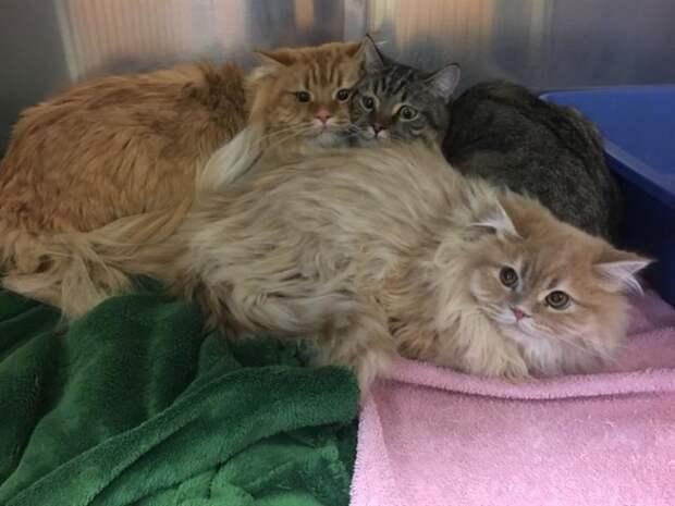 Полицейские нашли у дверей зоомагазина трех породистых котов с запиской