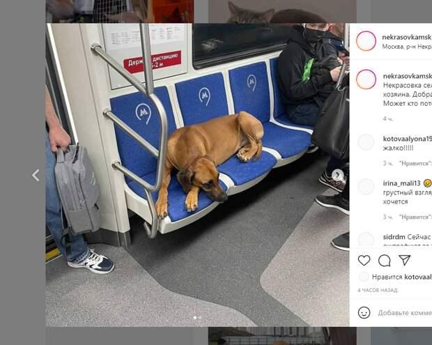 В Некрасовке «Хатико» отправился в путешествие по метро