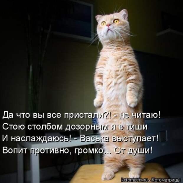Лучшая котоматрица недели (28 фото)