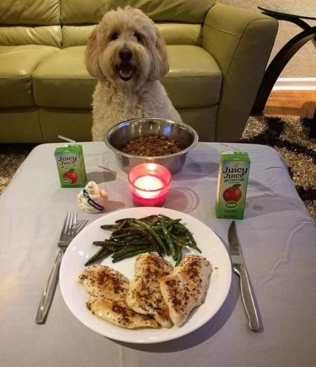 Ужин на двоих животные, жизнь, мир, роскошь, собака, удобство, фото