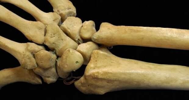 5. Наши кости такие же твёрдые, как гранит тело, человек, шокирующие факты