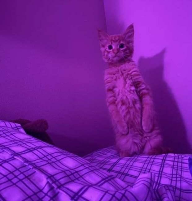17 котиков, которые ни с того ни с сего решили вести себя как люди