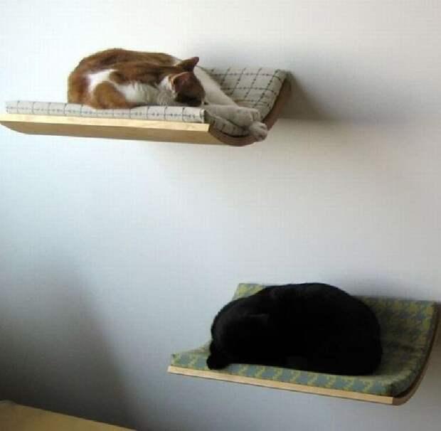 cathouse08 Дизайн для котов