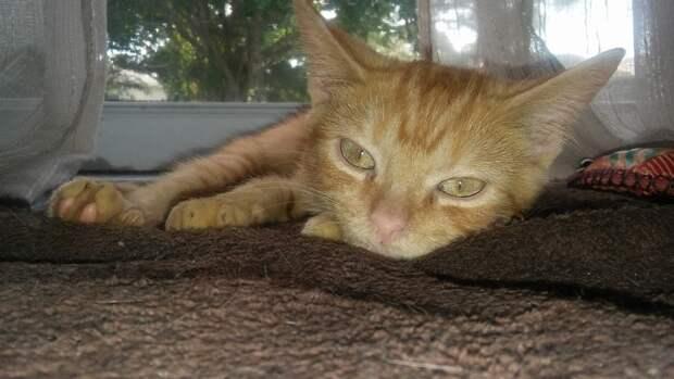 Бездомному котеночку сломали позвоночник и выкинули на дорогу, но сейчас он наконец-то может прыгать!