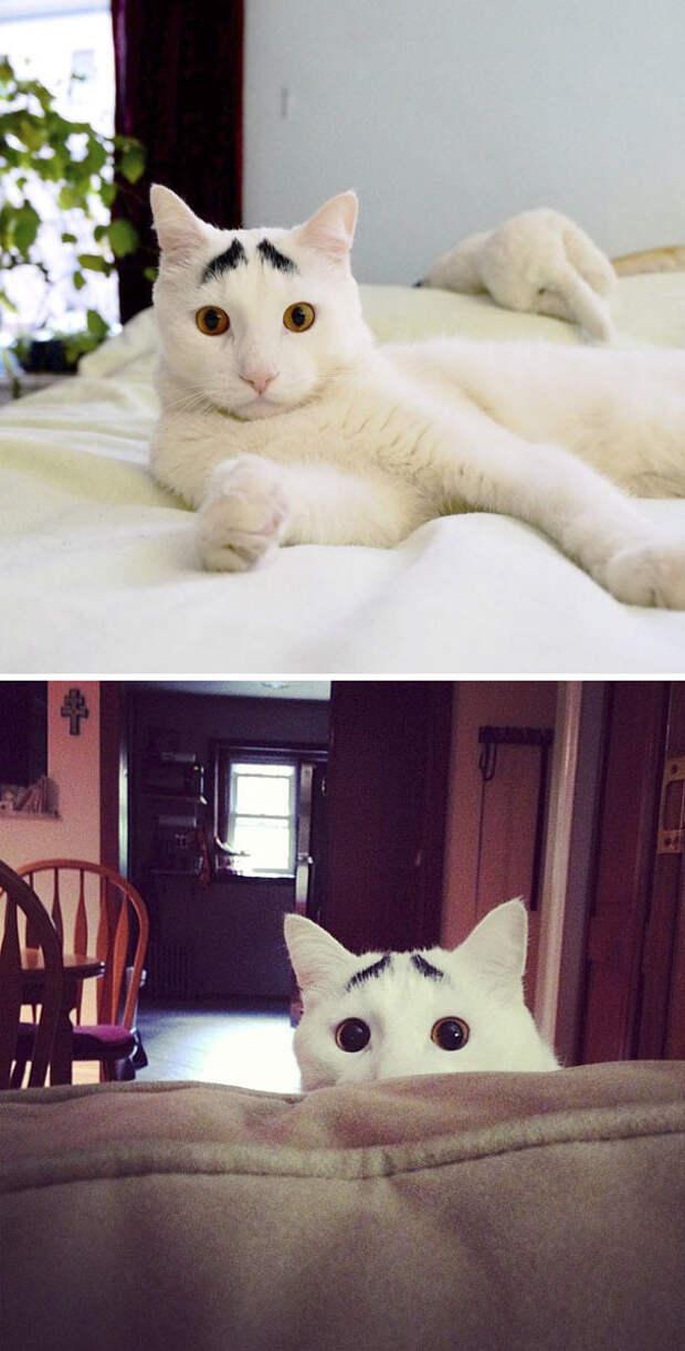Это - Сэм, у него есть брови, и он - само очарование животные, забавно, коты, кошки, неожиданно, окрас, окрас кошек, фото