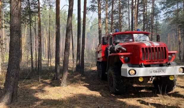 Лесной пожар около села Червишево прошел 52 гектара