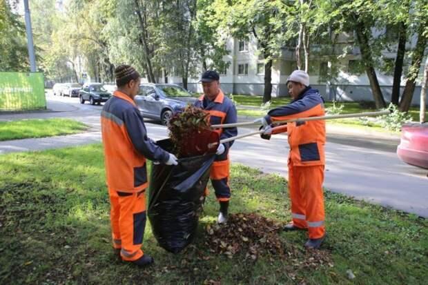 Видео: эксперты рассказали, где в СВАО нужно убирать листву