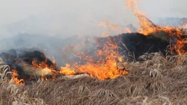 Жителей Алтайского края предупредили о высокой пожароопасности