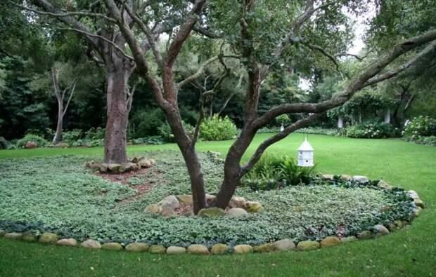 Пространство вокруг дерева не должно быть скучным: 20+ красивых идей для вдохновения