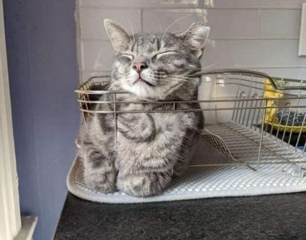Находчивые коты, которые прекрасно устроятся и без лежанки, и даже без коробки (19 фото)