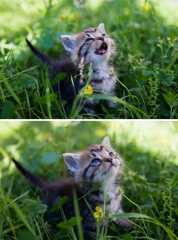 Двухнедельный Фостер впервые встречается с солнцем животные, котики, лучи, погреться, солнечные ванны, солнце, температура, тепло
