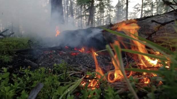 В Крыму предупредили о высокой пожароопасности