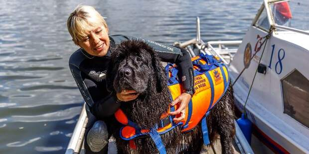 Лучший друг в воде и на суше: как проходят тренировки собак-спасателей