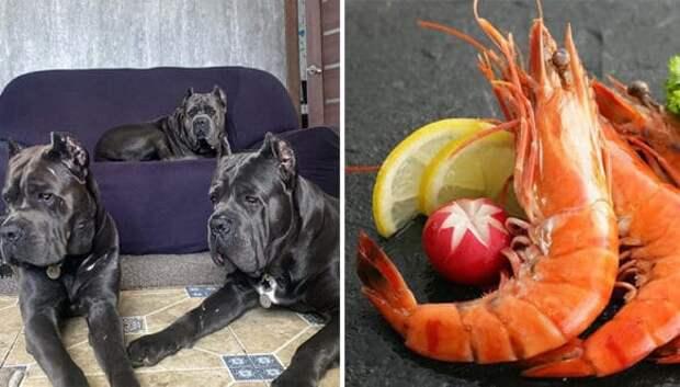Креветки, телятина и перепелиные яйца: россиян возмутил рацион собак одной заводчицы