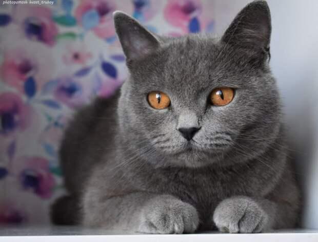 Из мусорного бака на нас смотрели два янтарных глаза. Британская кошка, поняв, что не обидим, продолжила искать еду в мусоре
