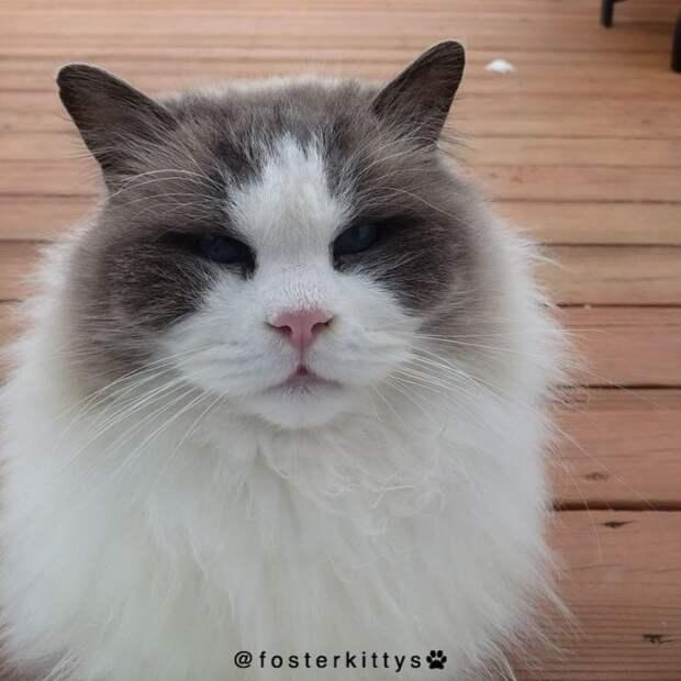 Брошенный кот бродил от одного порога к другому, прося еды история, история спасения, коты, кошки, помощь животным, спасение животных, трогательно