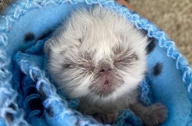 Этот котенок выглядит как маленький дедушка. В интернете его обожают!