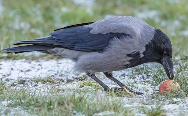 птицы в саду и огороде вред польза